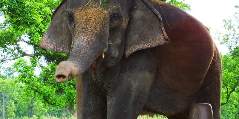 Centre d'élevage des éléphants- Chitwan - Népal © Doré. Elisa