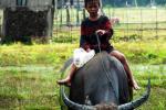 Enfant dans les champs