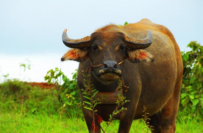Une faune exceptionnelle - Ratanakiri