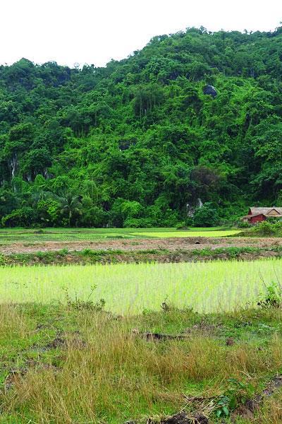 Phnom Chork - vue sur les rizières