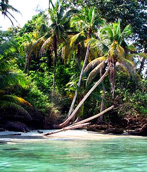 Parc Cahuita - Costa Rica