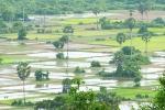 Rizières du Baray Oriental