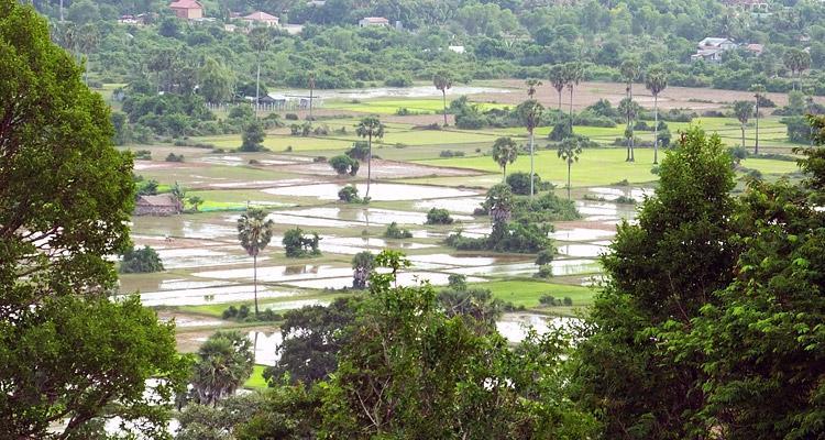 Rizieres au sommet de Phnom Bakheng